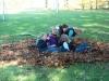 2008-11-08-laub07
